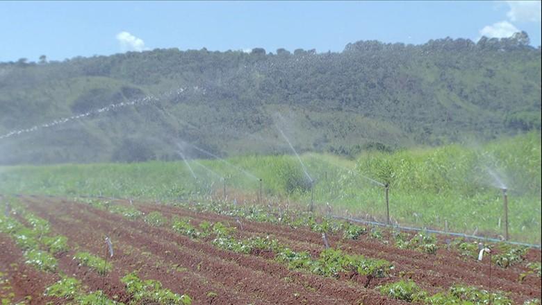 tv-batata-doce-plantacao-irrigacao (Foto: Reprodução/ TV Globo)
