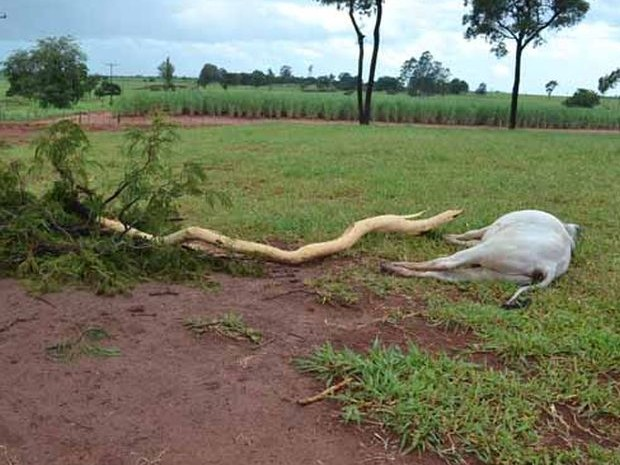 Galhos da árvore que foi atingida caíram  (Foto: Divulgação/ I7 Notícias)