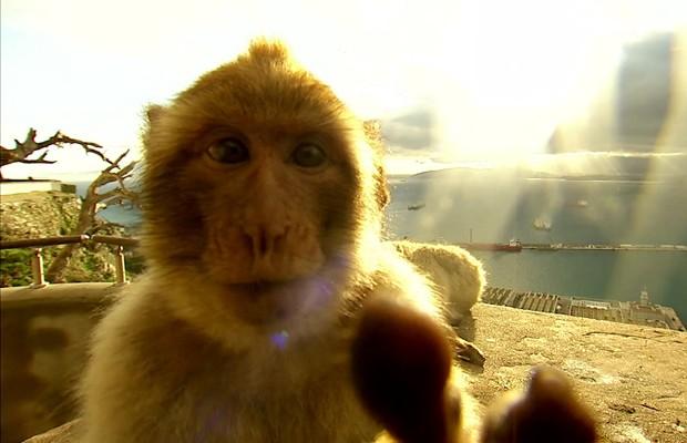 Famílias de macacos podem ser vistas na cidade e até dentro de escolas (Foto: BBC)