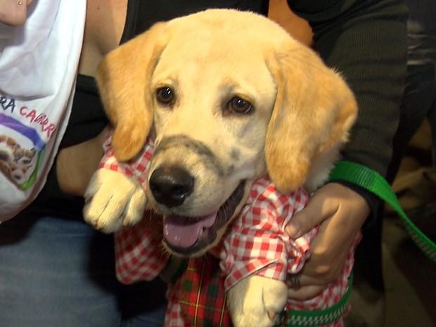 Com 'bigode postiço' e roupa de matuto cão participou da 1ª Cãodrilhada, evento que juntou caminhada e quadrilha para cães no São João de Campina Grande (Foto: Reprodução/TV Paraíba)