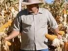 Em MS, produção de milho safrinha deve crescer 60% em relação a 2011