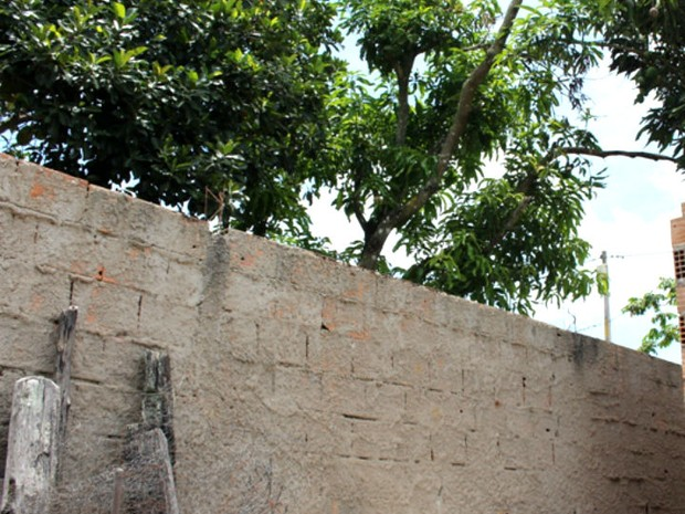 Muro onde adolescente subiu  e foi baleado fica junto à mangueira, no sul da Bahia (Foto: Sessé Guimmas/Medeiros Dia Dia)
