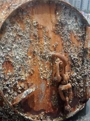 Peça encontrada na praia da Vila Caiçara, em Praia Grande (Foto: Luciane Knapick/VC no G1)