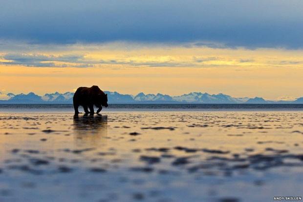 A silhueta de um urso-cinzento contra o horizonte montanhoso no Alasca encantou os jurados e foi a grande vencedora do prêmio anual de fotografia animal da Zoological Society of London  (Foto: Andy Skilen)
