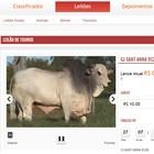 Momento de investir na pecuária