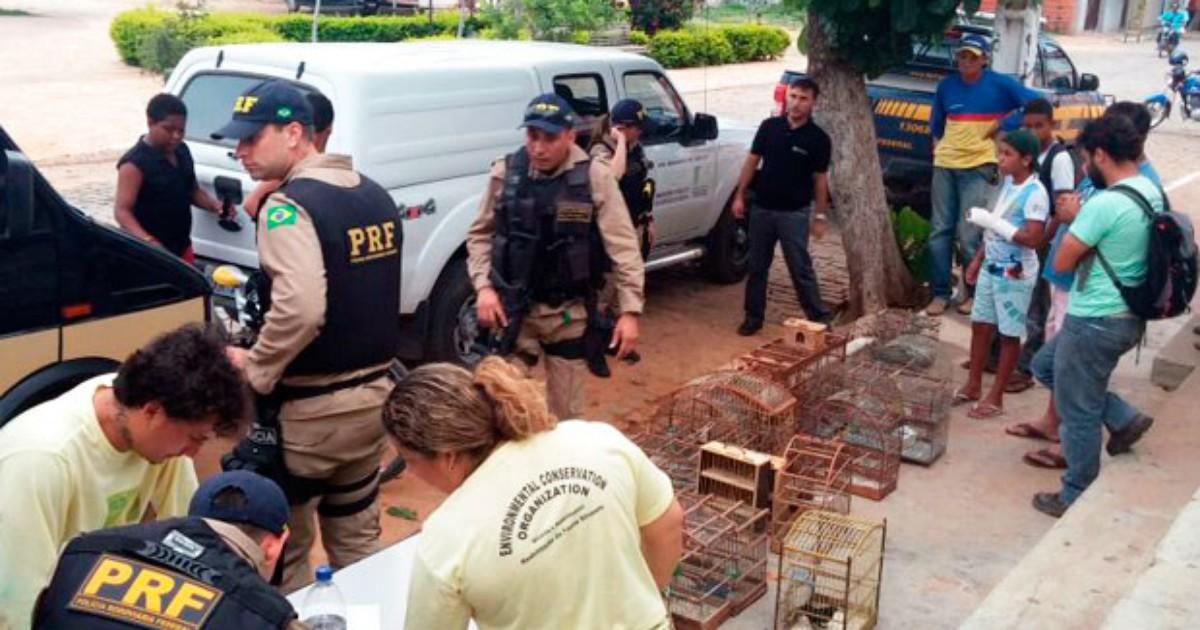 Operação integrada apreende 870 animais silvestres; nove foram ... - Globo.com