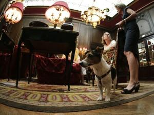 Cães podem passear no lobby, mas sempre de coleira (Foto: Leonhard Foeger/Reuters)