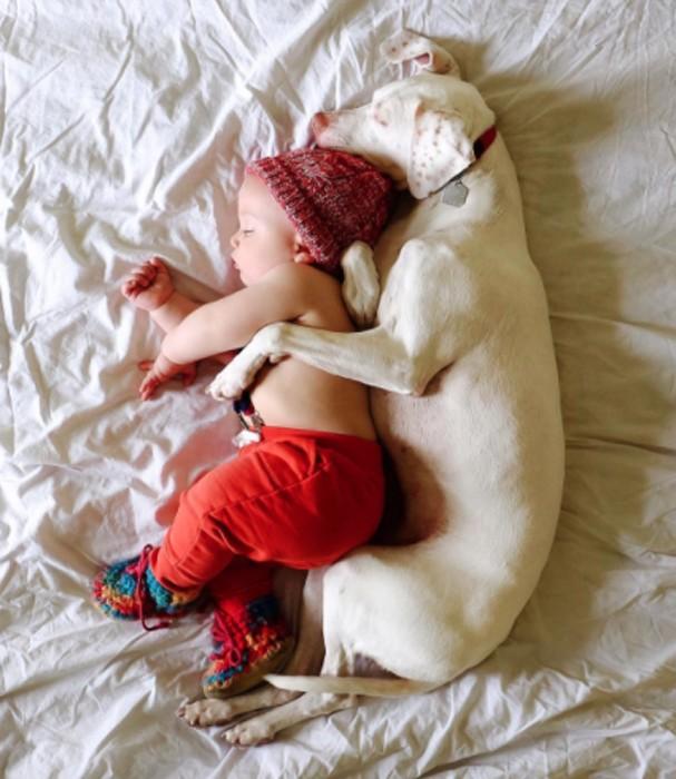 Cachorra Nora escolheu Archie como melhor amigo (Foto: Instagram/Reprodução)