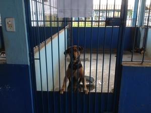 Cães e gatos foram adotados (Foto: Gaia Quiquiô/G1)