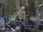Repórter se atrapalha após flagrar cão dirigindo 'cortador de grama'