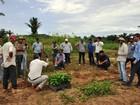 Embrapa oferece treinamento a agricultores familiares em Porto Velho