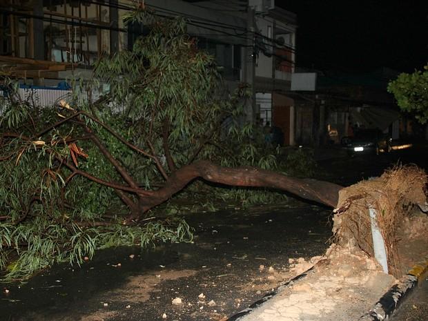 Árvore na Avenida Ayrão foi derrubada pelo vento (Foto: Aldenor Lima/VC no G1)