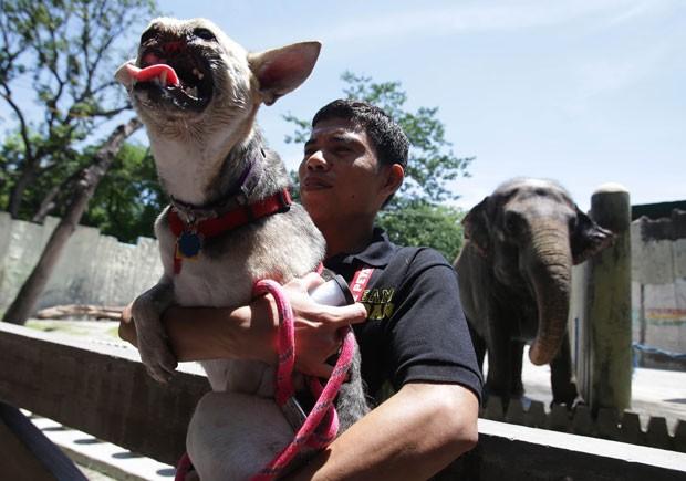 'Kabang' durante visita ao zoológico de Manila neste domingo (9) (Foto: Aaron Favila/AP)