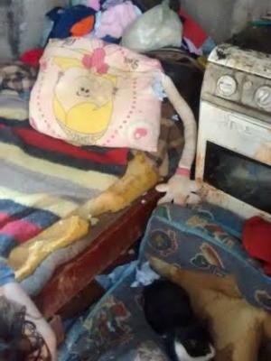 Polícia constatou local insalubre onde criança vivia com suspeito (Foto: Graziela Rezende/G1 MS)
