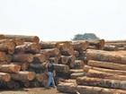 Operação contra desmatamento em Mato Grosso prende oitavo suspeito