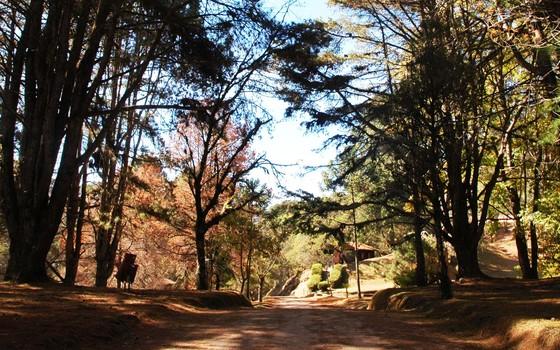 home- Horto Florestal com oito mil hectares de área verde em Campos do Jordão (Foto: Márcia Tavares/Editora Globo)