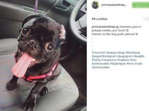 Instagram Princesa Léia Mundo Pet (Foto: Reprodução/Instagram)