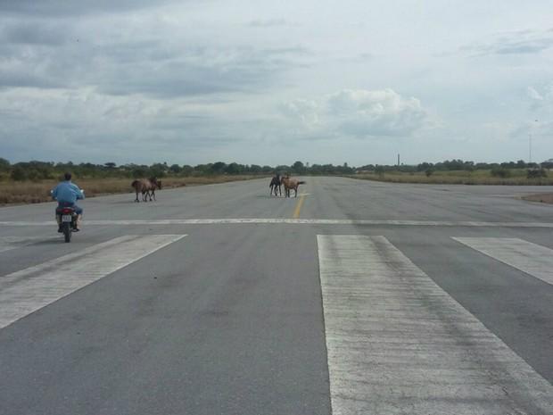 Homem como moto espanta os cavalos na pista do aeroporto de Porto Murtinho, na sexta-feira passada (24), para o pouso de avião (Foto: Edicarlos Oliveira/Arquivo Pessoal)