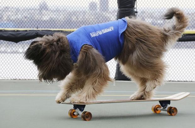 No programa, 'Norman' anda de bicicleta, de skate e patinete (Foto: Mark Lennihan/AP)