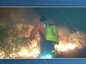 Brigadistas combateram as chamas durante a madrugada (Foto: Reprodução/TV Bahia)