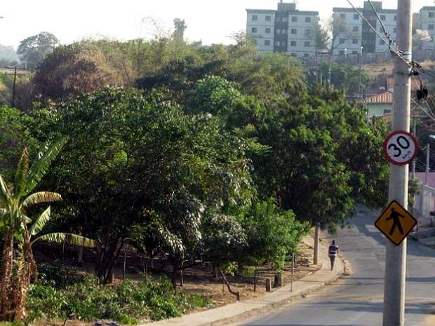 Árvores que os moradores do Jardim Florence I, em Campinas, querem preservar (Foto: Luciano Calafiori/G1 Campinas)