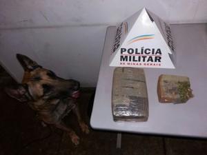 Cão farejador e droga apreendida em Pará de Minas (Foto: Policia Militar/ Divulgação)