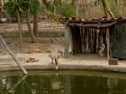 No CE, sistema de 'mandala' mantém produção mesmo em tempos de seca