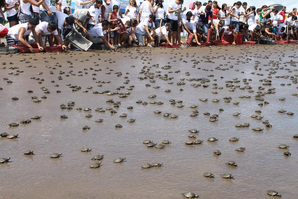 Instituições e moradores locais vão participar da soltura dos animais (Foto: Eliazar Bezerra/Ibama)