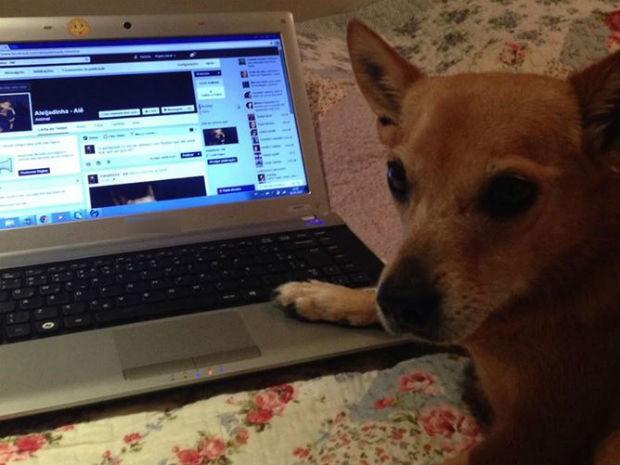 Dona mantém página em rede social da cadela de estimação (Foto: Patrícia Alcoléa/Arquivo pessoal)