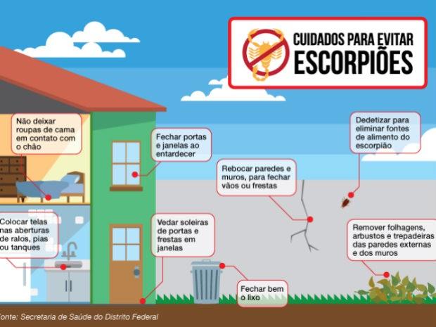 Cuidados para evitar escorpiões (Foto: Edição de Arte/Agência Brasília)
