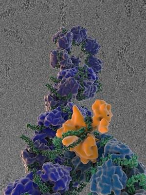 Replicação do vírus influenza, separando os diferentes tipos de proteínas por cores (Foto: Wilson, Carragher and Potter labs/Divulgação)