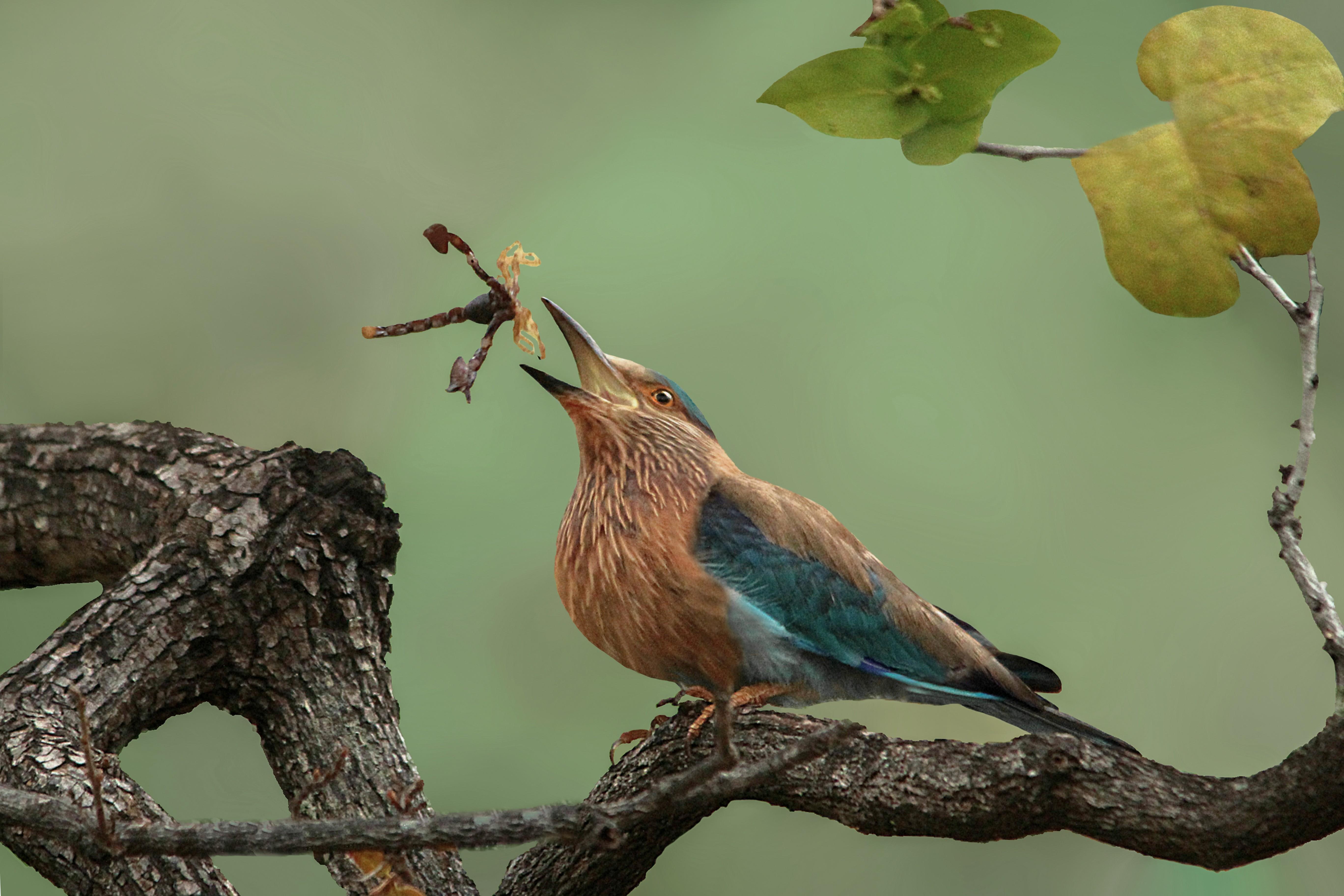 Um flagrante da natureza registrado por Susmita Datta e que ganhou menção honrosa na competição (Foto: Susmita Datta / Divulgação)