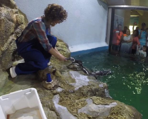 Michelly Correa aproveitou para alimentar os pinguins. Olha só que fotos! (Foto: Reprodução/RPC)