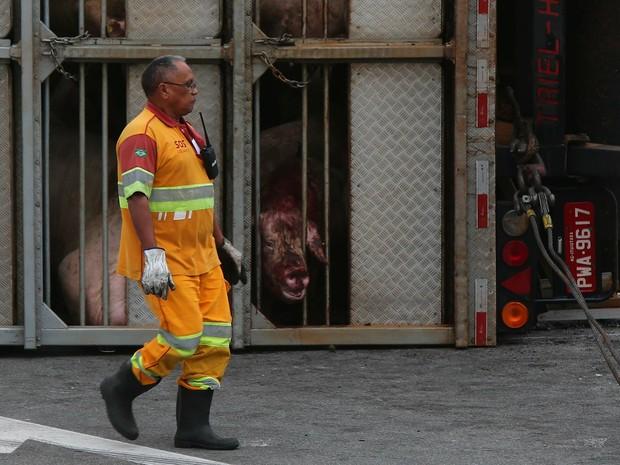 Carreta com porcos tomba no Rodoanel (Foto: Marcos Bezerra/Futura Press/Estadão Conteúdo)
