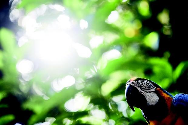 O maior viveiro de aves da América do Sul (Foto: Timothy Evan Cook)