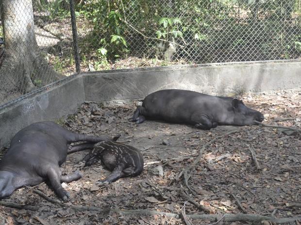 Logradouros dos animais serão ampliados na reforma do parque zoobotânico (Foto: Abinoan Santiago/G1)