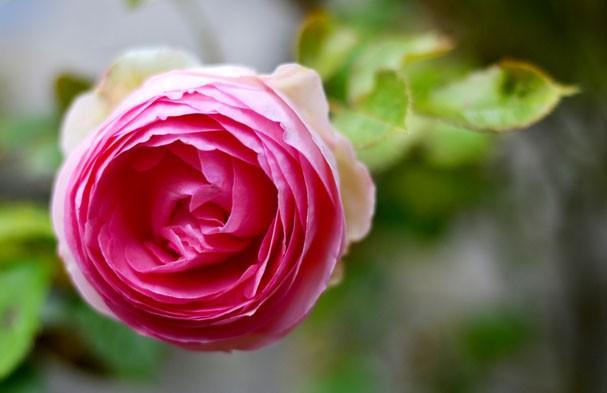 Flores para ter em casa (Foto: Getty Images)