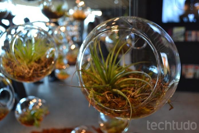 Google em BH: sementes de plantas do Cerrado são cultivadas in vitro na recepção (Foto: Melissa Cruz / TechTudo)