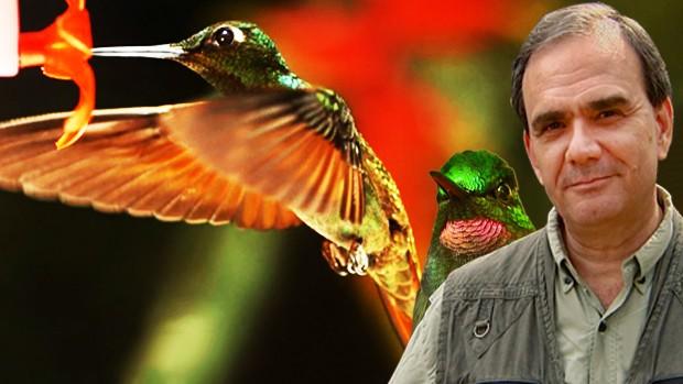 Beija-flor é ave de comportamentos curiosos (Montagem/TG)