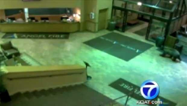 Urso é flagrado passeando em lobby de hotel no Novo México (Foto: Reprodução)
