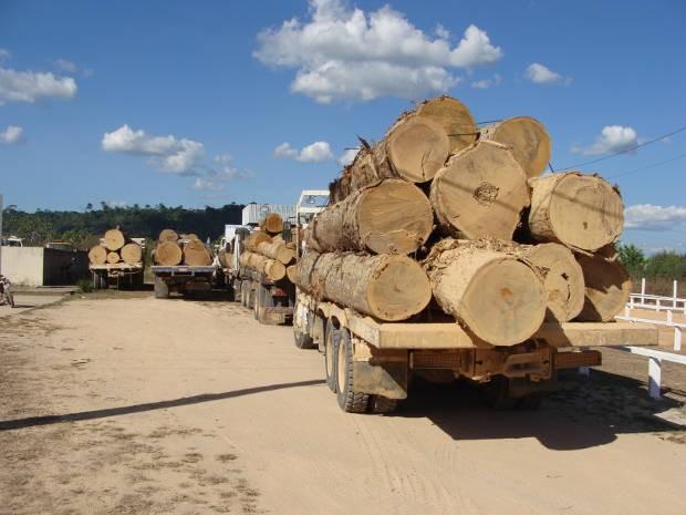 O Ibama apreendeu 250 m3 de madeira ilegal no interior da Floresta Nacional (Flona) Jamanxim, em Novo Progresso, no oeste do Pará (Foto: Divulgação Ibama)