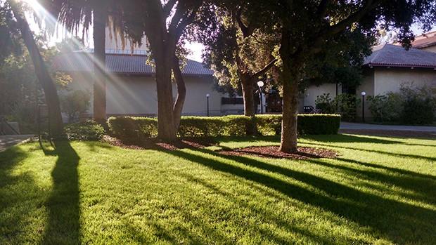 cerca para jardim ribeirao preto : cerca para jardim ribeirao preto:Escolha a cerca viva ideal para delimitar espaço e enfeitar o jardim