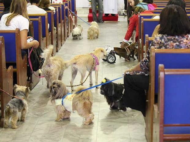 Missa animais domésticos São Roque Juiz de Fora 1 (Foto: Natália Lott/ Pascom Paroquia da Glória)