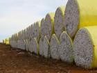 Leilão para venda e escoamento de algodão negocia 53 mil ton de MT