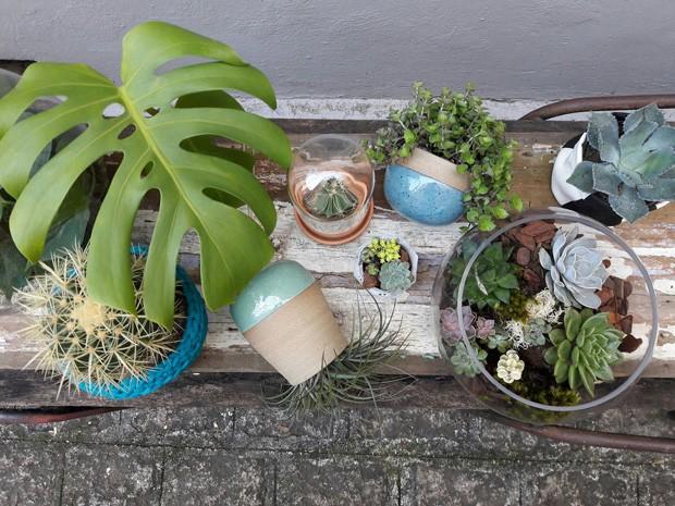 Borealis, a floricultura especializada em plantas para casa (Foto: Divulgação)