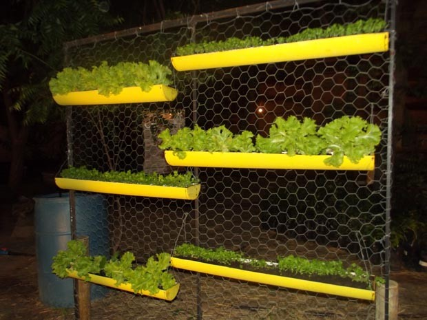 Agroecologia (Foto: Klênyo Galvão/G1)