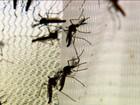 Governo do AP confirma 13 novos casos de zika; todos são de Oiapoque
