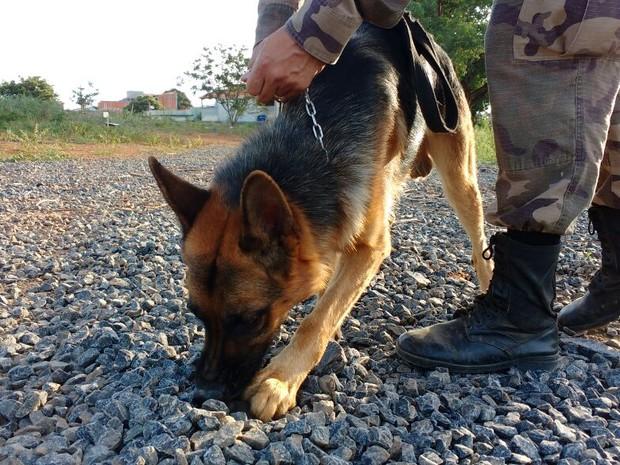 """Cão """"Nero"""" encontra drogas enterradas sob britas (Foto: Juliana Peixoto/G1)"""