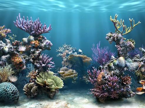 screenshot de Proteção de Tela: Marine Aquarium