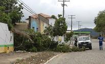 Árvore cai e derruba muro de escola (Arnaldo Alves / ItapebiAcontece)